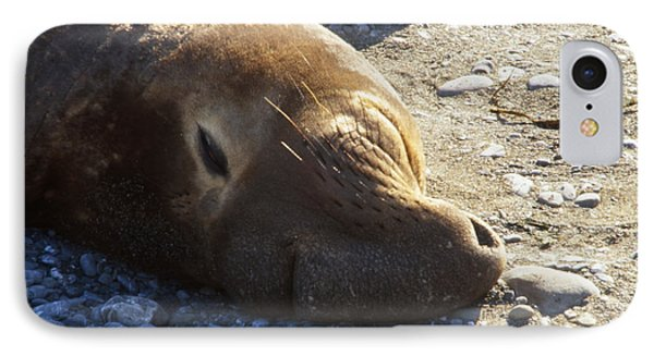 Northern Elephant Seal IPhone Case