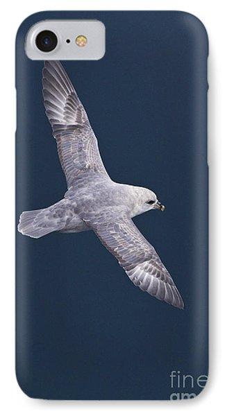 Northern Fulmar IPhone Case by Jean-Louis Klein & Marie-Luce Hubert