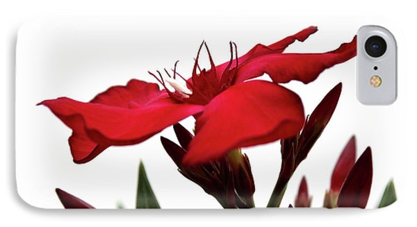 IPhone Case featuring the photograph Oleander Blood-red Velvet 3 by Wilhelm Hufnagl
