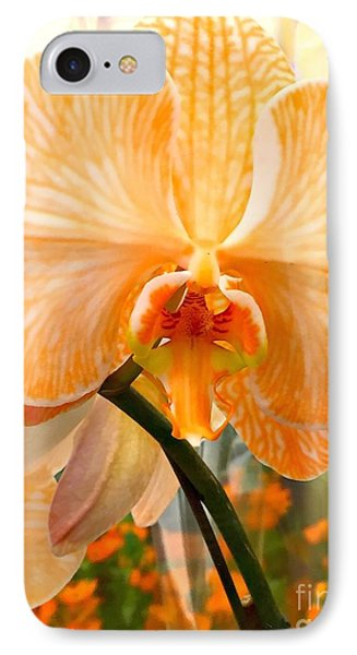 Orange Delight IPhone Case