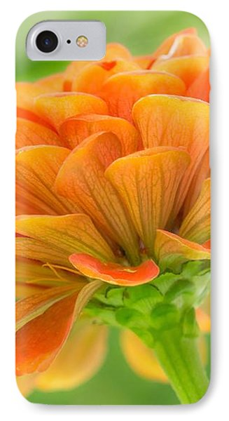 Orange Zinnia  IPhone Case by Jim Hughes