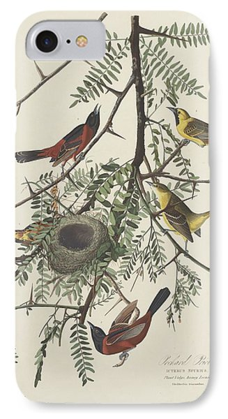 Orchard Oriole IPhone 7 Case