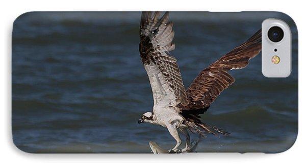 Osprey In Flight IPhone Case by Meg Rousher
