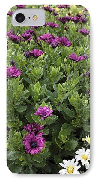 Osteospermum Flowers Phone Case by Erin Paul Donovan