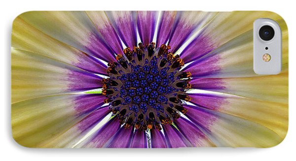 Osteospermum The Cape Daisy IPhone Case by Shirley Mitchell