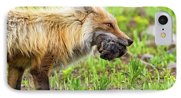 Out Foxed  IPhone Case by Scott Warner