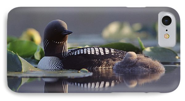 Pacific Loon Gavia Pacifica Parent IPhone Case by Michael Quinton