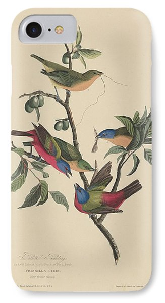 Painted Bunting IPhone 7 Case by Rob Dreyer