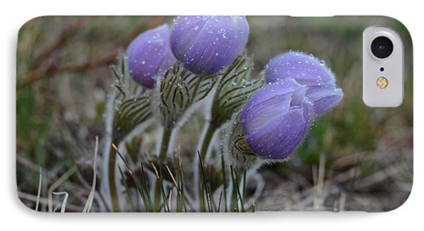 Pasque Flowers  IPhone Case