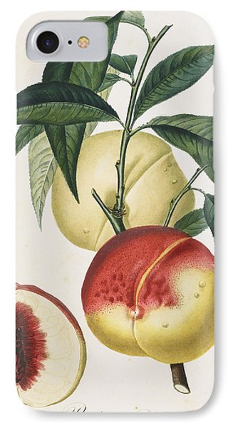 Peaches IPhone Case by Pierre Antoine Poiteau