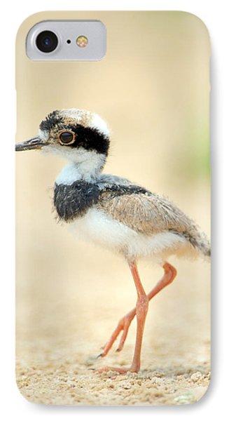 Pied Plover Vanellus Cayanus Chick IPhone Case