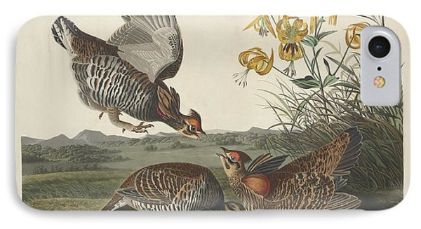 Pinnated Grouse IPhone Case by Rob Dreyer
