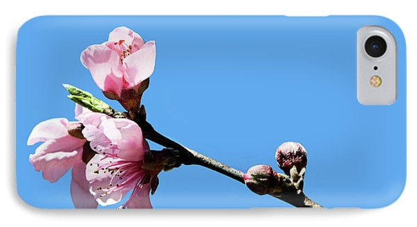 Plum Blossoms IPhone Case by Kristin Elmquist