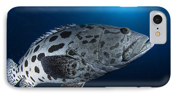 Potato Grouper, Australia Phone Case by Todd Winner