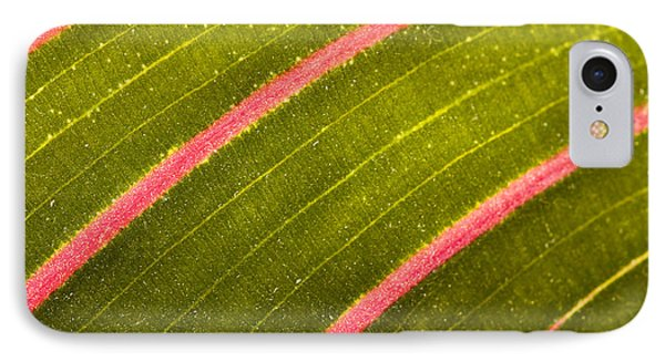 Prayer Plant Maranta Leuconeura IPhone Case by Gabor Pozsgai