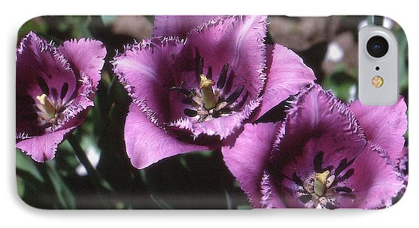 Purple Flowers Two  IPhone Case