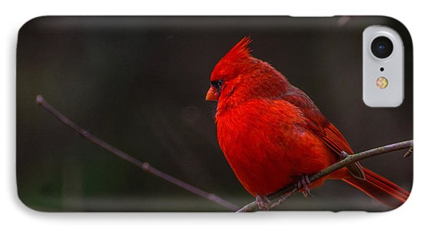 Quality Quiet Time  IPhone Case by John Harding