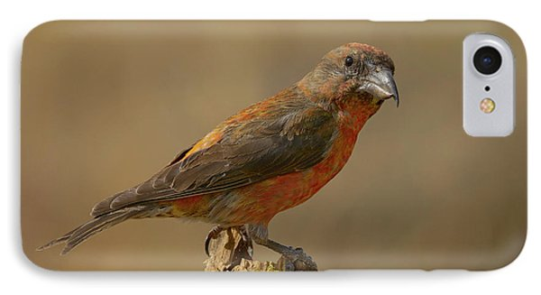 Crossbill iPhone 7 Case - Red Crossbill by Doug Herr