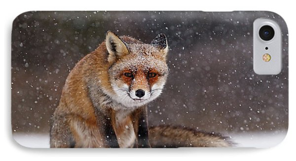 Red Fox Sitting In The Snow IPhone Case by Roeselien Raimond
