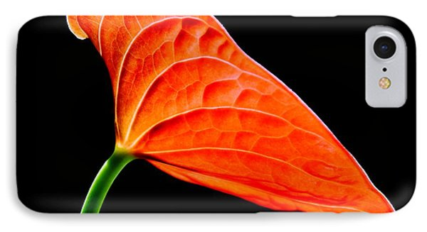 red Lily blossom IPhone Case by Werner Lehmann