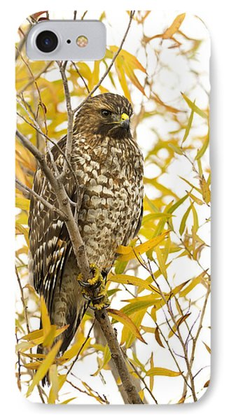 Red-shouldered Hawk Phone Case by Doug Herr