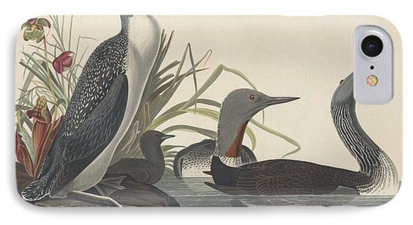 Red-throated Diver IPhone Case