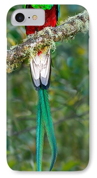 Resplendent Quetzal Pharomachrus IPhone Case by Panoramic Images