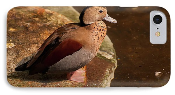 IPhone Case featuring the photograph Ringed Teal On A Rock by Chris Flees