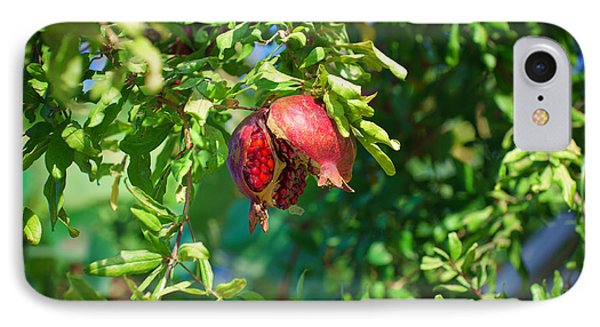 Ripe Pomegranate On The Tree In Jerusalem During Sukkoth IPhone Case