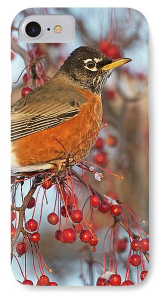 IPhone Case featuring the photograph Robin.. by Nina Stavlund