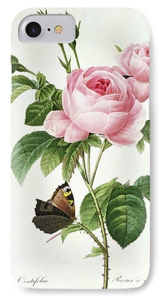 Rosa Centifolia IPhone Case by Pierre Joseph Redoute