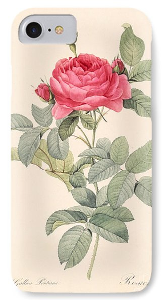 Rosa Gallica Pontiana IPhone Case by Pierre Joseph Redoute