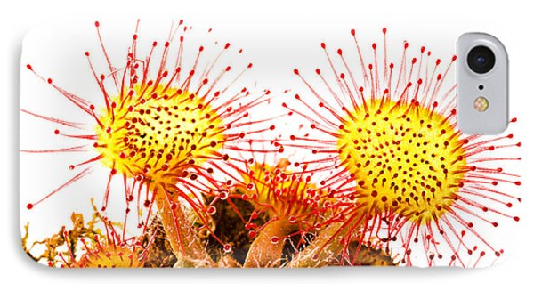 IPhone Case featuring the photograph Round-leaved Sundew Drosera Rotundifolia by Gabor Pozsgai