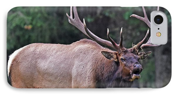 IPhone Case featuring the photograph  Royal Roosevelt Bull Elk by Jack Moskovita