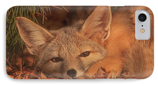 San Joaquin Kit Fox  IPhone Case by Brian Cross