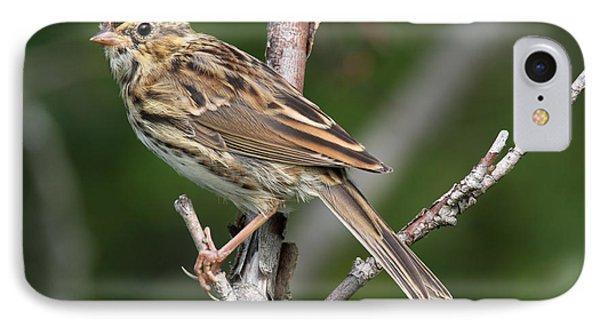 Savannah Sparrow IPhone Case