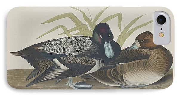 Scaup Duck IPhone Case