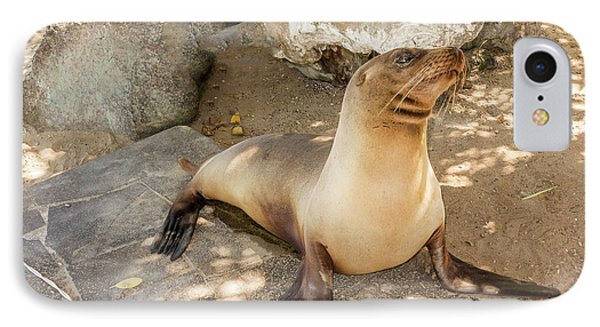 Sea Lion On The Beach, Galapagos Islands IPhone Case by Marek Poplawski