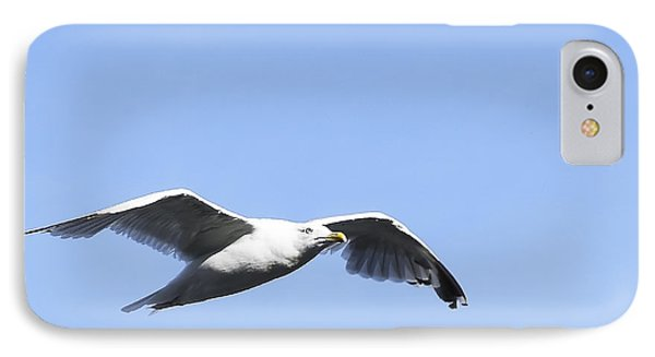 Seagull IPhone Case by Svetlana Sewell