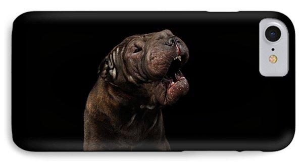 Sharpei Dog Isolated On Black Background IPhone Case by Sergey Taran