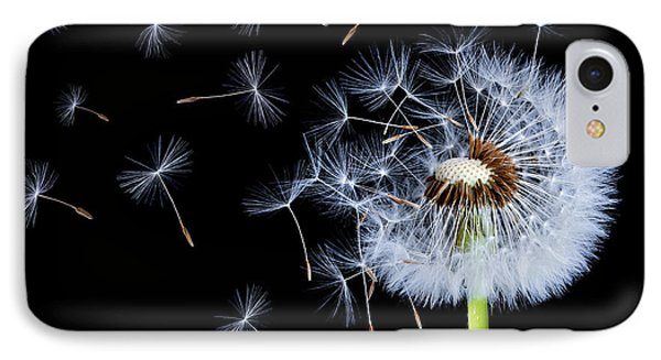 Silhouettes Of Dandelions IPhone Case by Bess Hamiti