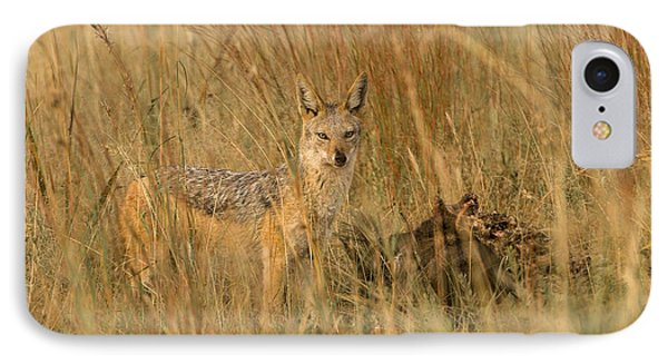 Silver Backed Jackal IPhone Case by Patrick Kain