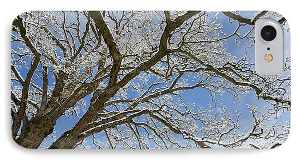 Winter Branch IPhone Case by Tim Gainey