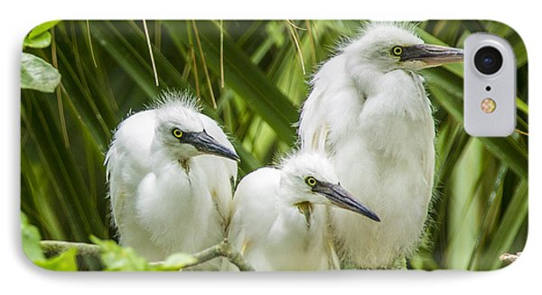 IPhone Case featuring the photograph Snowy Egret Chicks by Paula Porterfield-Izzo