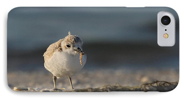 Snowy Plover IPhone Case by Meg Rousher