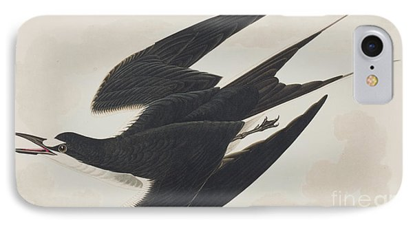 Sooty Tern IPhone Case by John James Audubon