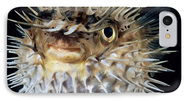 Spiny Puffer Phone Case by Dave Fleetham - Printscapes
