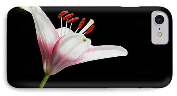 IPhone Case featuring the photograph Study Of A Lily In Magenta, White, And Red #2 By Flower Photographer David Perry Lawrence by David Perry Lawrence