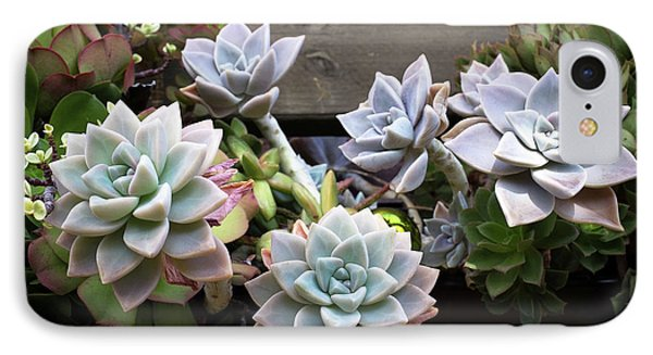 IPhone Case featuring the photograph Succulents by Catherine Lau