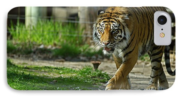 IPhone Case featuring the photograph Sumatran Tiger by JT Lewis